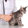 Ветеринарные клиники в Горняцком